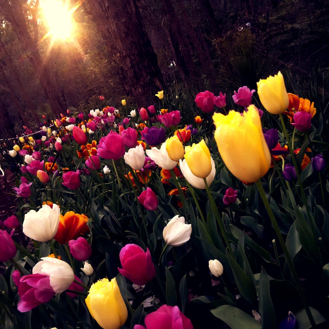 beautiful bright colorful colourful
