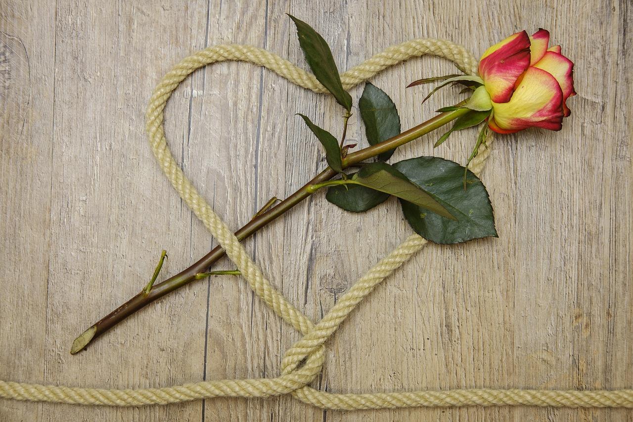 rose-3198626_1280